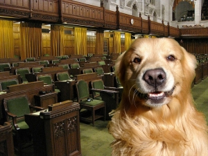 The Smew: Harper Brings Dog To Parliament As Conversation Starter